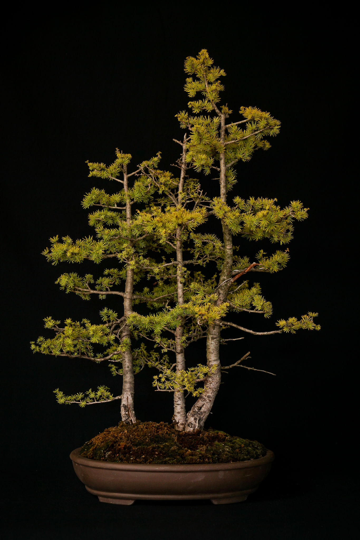 Eastern Larch Forest