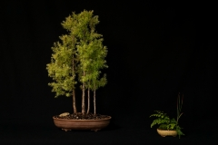 American Larch Forest