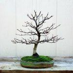 Acer rubrum by Dan Short
