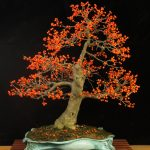 Ilex verticilatta by David Bennett