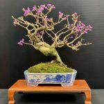 Japanese Beautyberry by Judy Barto
